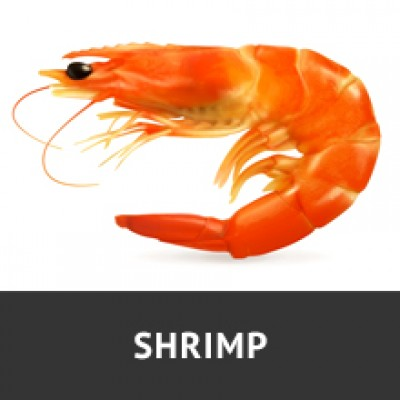 CLICK TO VIEW SHRIMP PRODUCTS PAGE