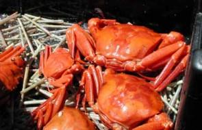 Carribean Lobster